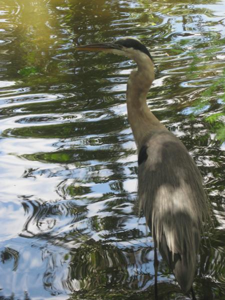 homasassa bird #2 P&R
